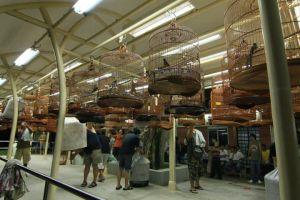 Suasana lomba burung murai batu di Singapura