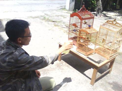 Asyik menyemprot burung pleci di arena Munas I Plecimania Indonesia di Jogja
