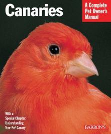 Wallpaper, gambar, foto, lukisan burung kenari (picture, painting and photo canary) (11)