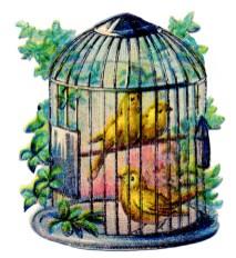 Wallpaper, gambar, foto, lukisan burung kenari (picture, painting and photo canary) (16)