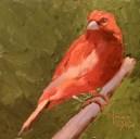 Wallpaper, gambar, foto, lukisan burung kenari (picture, painting and photo canary) (21)