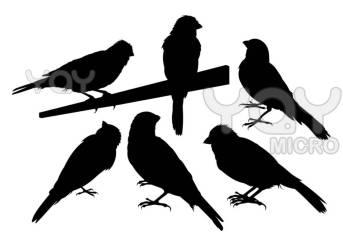 Wallpaper, gambar, foto, lukisan burung kenari (picture, painting and photo canary) (29)