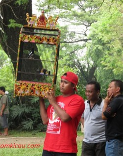 Bersiap menggantang kacer pada lomba burung Solo Kota Budaya 2012