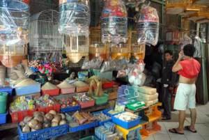 Pasar Burung Pramuka Jakarta