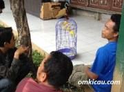 Antre memilih lovebird impor