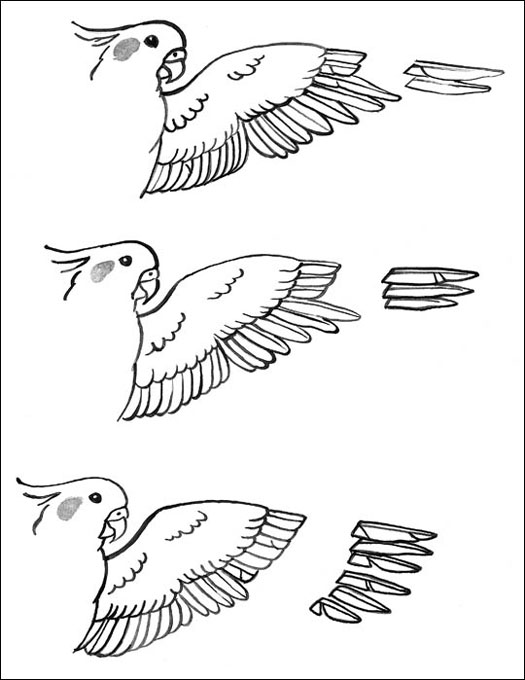 Wing Clipping