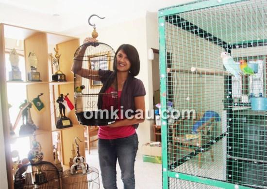 Putri Wijayanti mumpuni dalam merawat burung lomba.