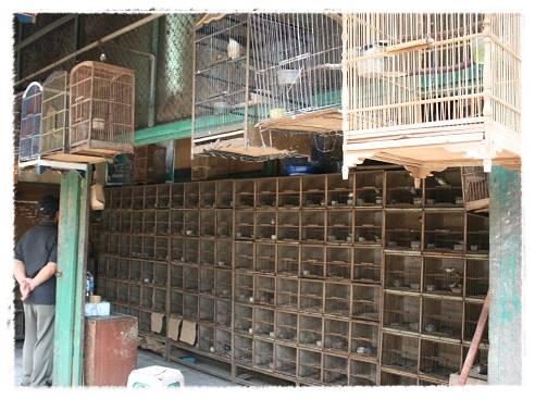 Kios burung di salah satu pasar burung di Jakarta