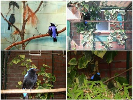 Kandang penangkaran yang digunakan dalam menangkarkan burung cucak biru