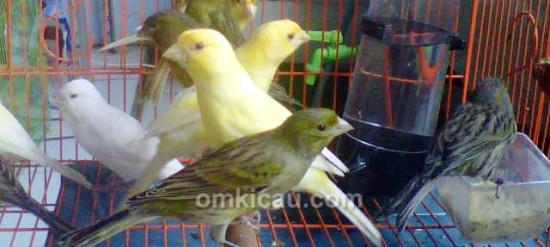 ZQ Bird Farm Jakarta