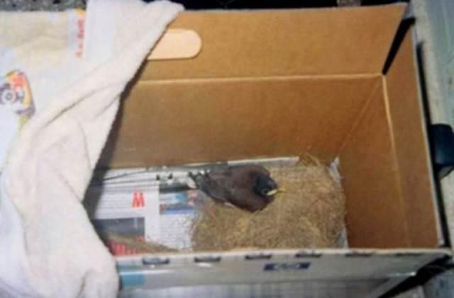 Cara merawat anakan burung
