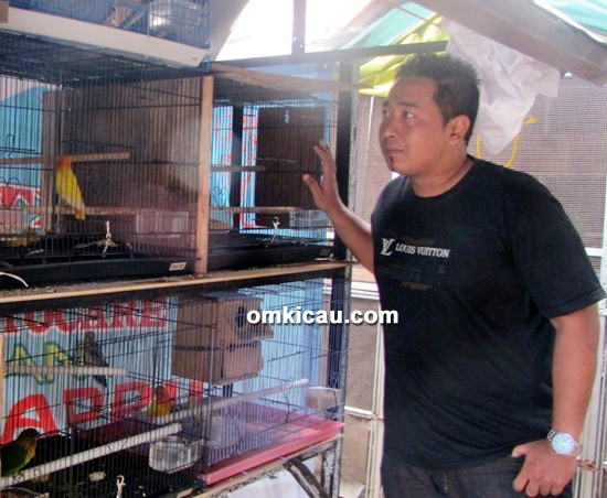 Jhonpur sediakan lovebird lokal