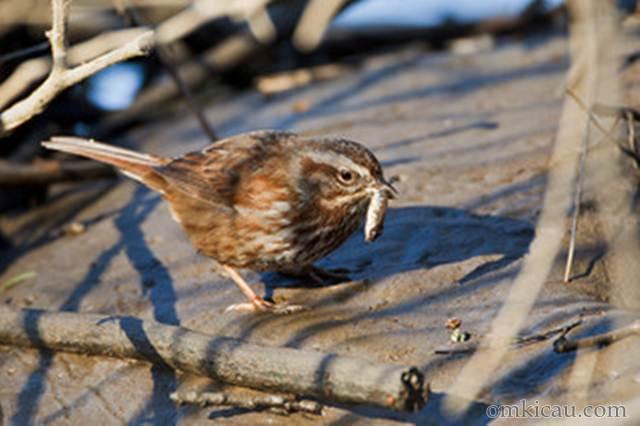 Burung yang sedang makan ikan