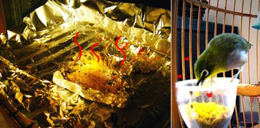 Tepung kunng telur yang siap disajikan untuk burung kesayangan