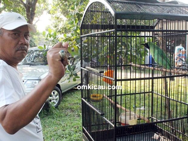 Om Nanang PLN dan cucak hijau Gajayana
