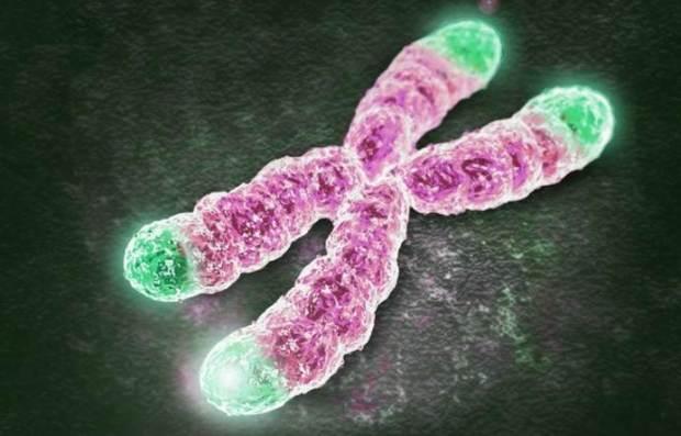 Telomere dalam kromosom, semakin pendek ukurannya semakin kecil perlindungannya terhadap kromosom