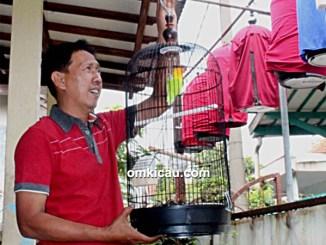 merawat lovebird impor