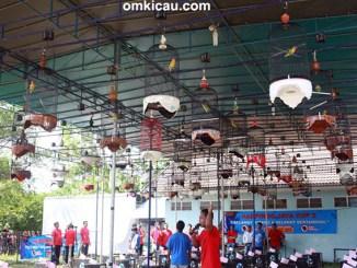 Harpindo Jaya Cup II - kelas lovebird