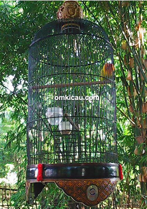 Lovebird Nyai Ronggeng
