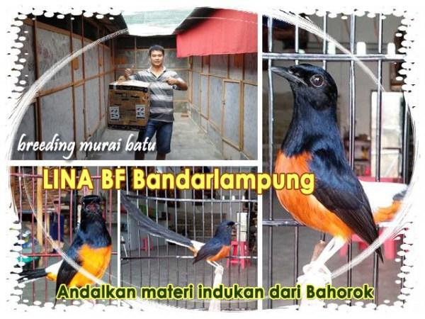 Lina BF Bandarlampung