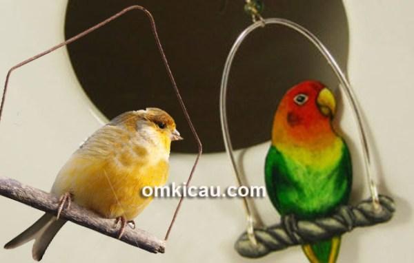 Ayunan untuk burung yang memiliki banyak manfaat