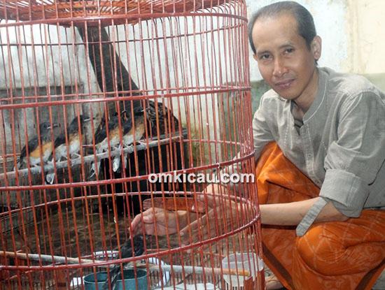 Breeding murai batu Sufi BF Jakarta