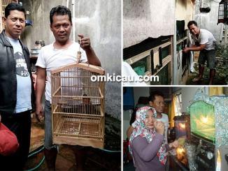 breeding murai batu RS BF Jakarta