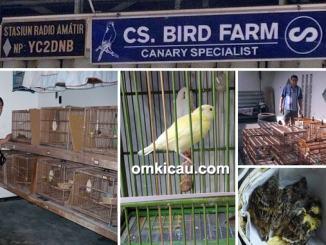 CS Bird Farm Semarang