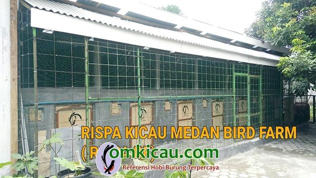 Rispa Kicau Medan B