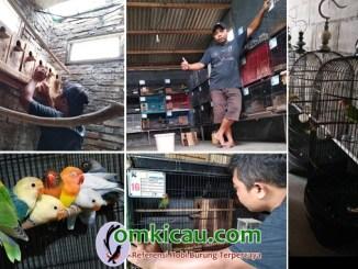 RHN Lovebird Farm