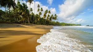 пляж пальма океан куба
