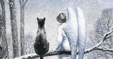 кот и ангел