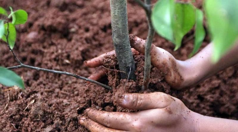 высаживать деревья