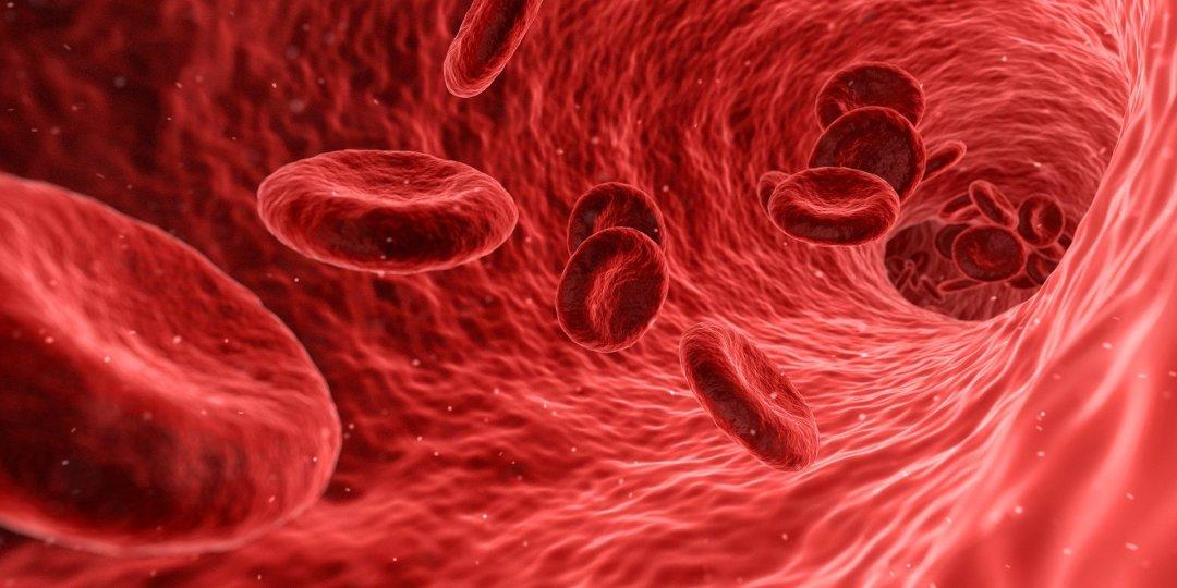 globules rouges dans un vaisseau sanguin