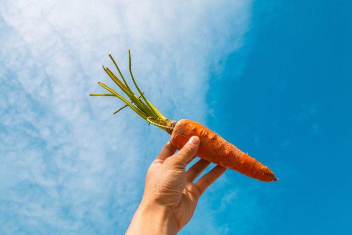 cri de la carotte-sophisme-végétaux-souffrance
