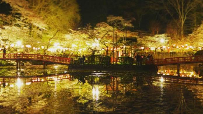 茂原公園桜まつりの開花予想や見頃はいつ?屋台は何が並ぶ?