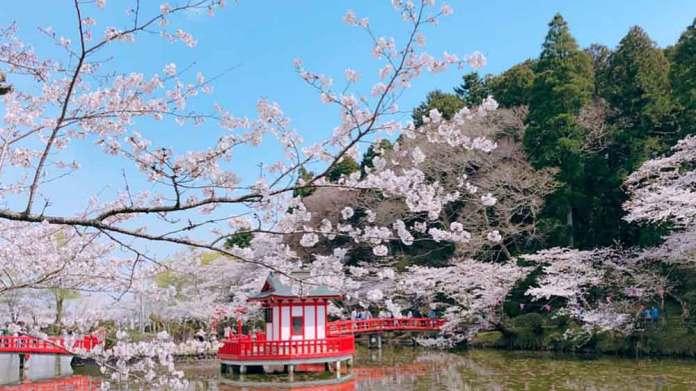 茂原公園桜まつり