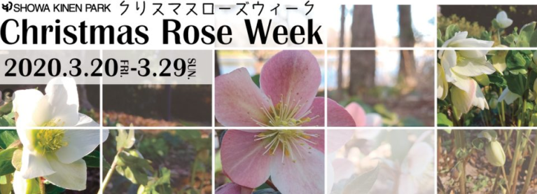 [Spring] Showa Kinen Park – Christmas Rose Week in March