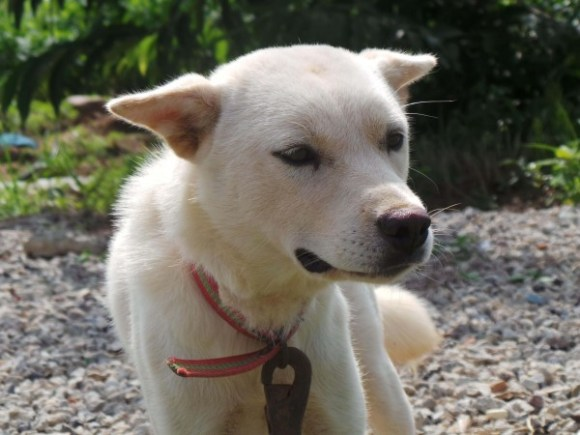 dog_white2