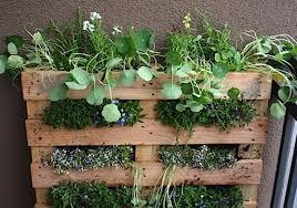 urban garden 6