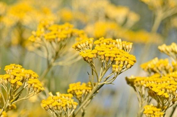 botanikfoto-534175-L