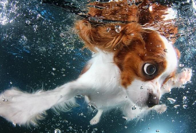 Cães mergulhando07