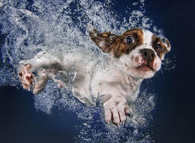 Cães mergulhando10