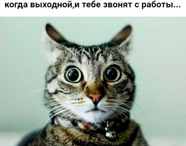 приколы про работу с котом