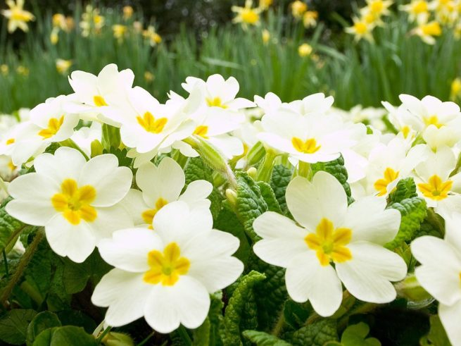 white-spring-flowers-14128-14568-hd-wallpapers
