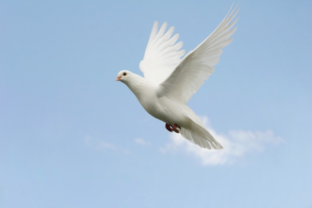 Pentecost-the dove, the flame and the higher Self