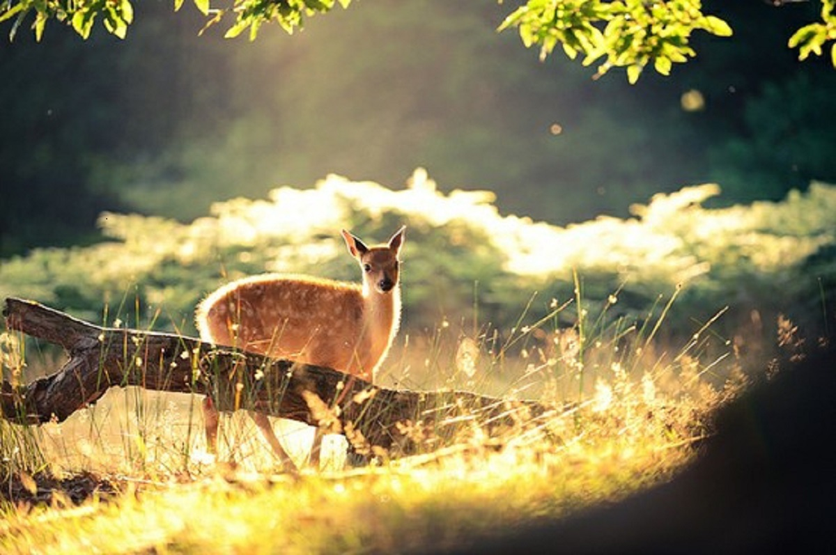 The deer in the heart- Anahata chakra