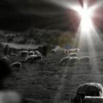 One night in Bethlehem- a meditation for Christmas Eve