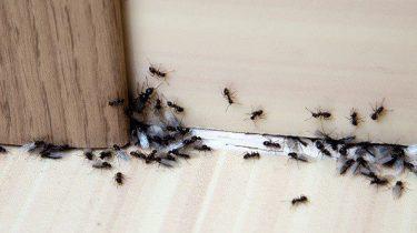 Meer ongedierteplagen in de toekomst   Rustige wespenzomer geen voorbode voor afname ongedierte