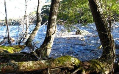 En flod flyter sakta fram och lever som människan